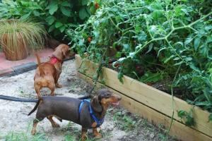 Discovering the garden.